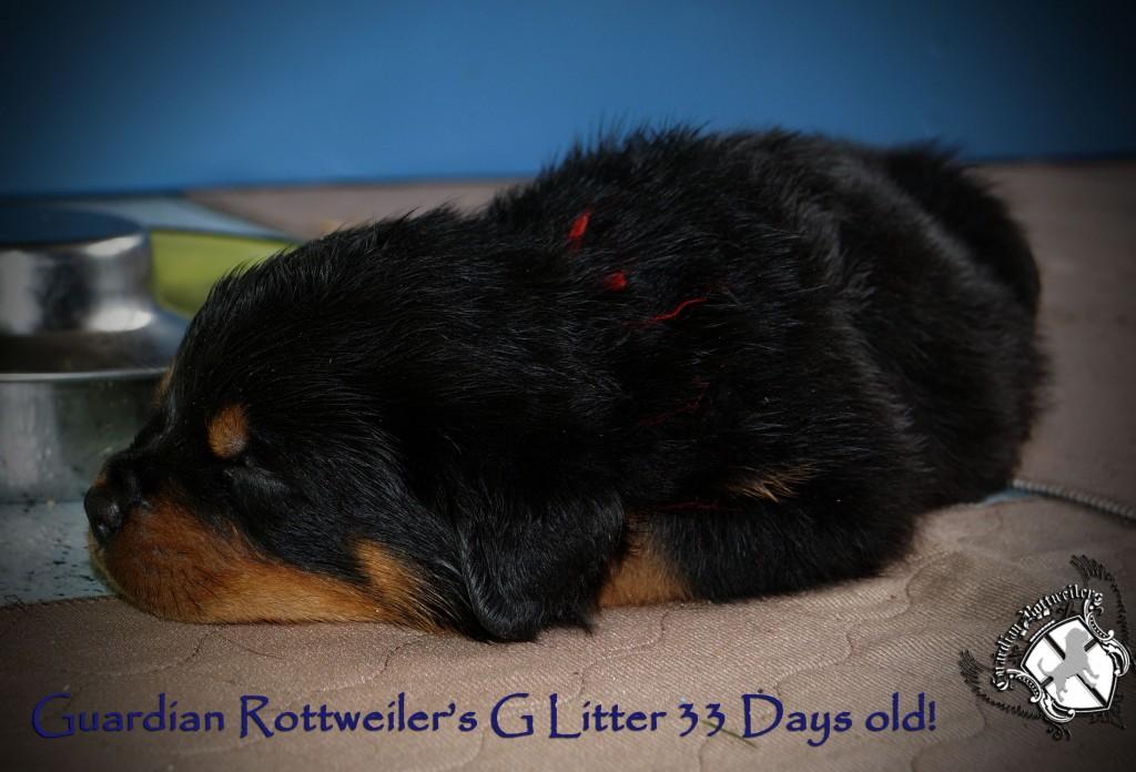 glitter33days04