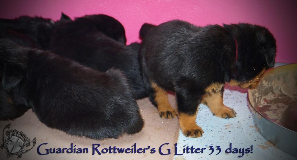 glitter33days06