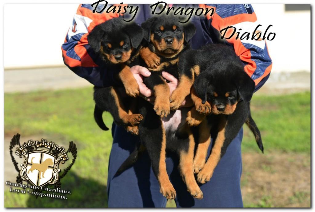 diablo_dragon_daisy10